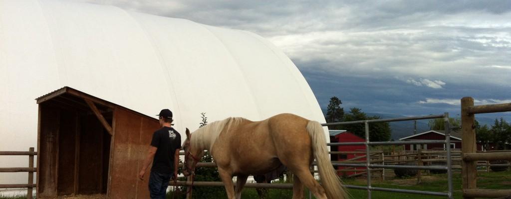 BC Horse Rescue